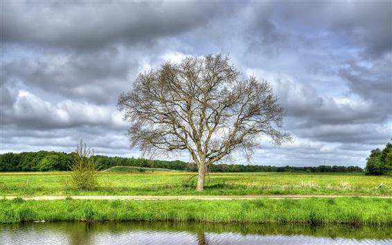 Wallpaper Tree, field, grass, summer, clouds