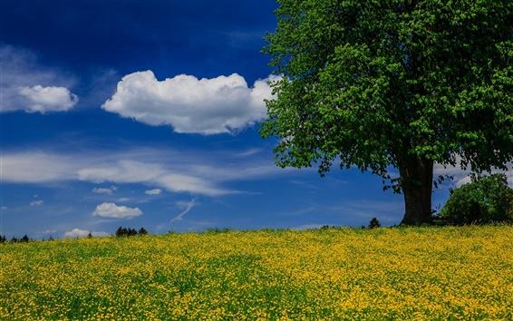 Wallpaper Tree, meadow, summer, blue sky, clouds