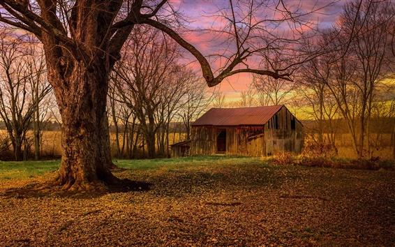 壁紙 木、廃屋、朝