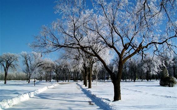 Fond d'écran Hiver, neige, gel, arbres, route