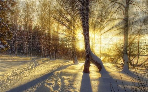 Обои Зима, снег, деревья, закат, солнечные лучи