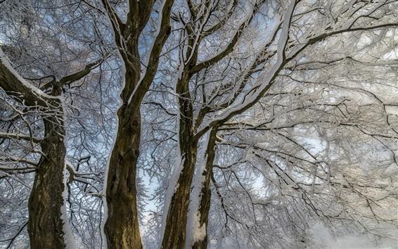 Fond d'écran Hiver, les arbres, branches, de la neige