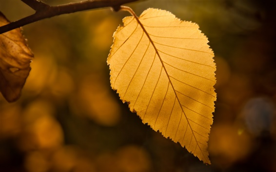 Wallpaper Yellow leaf, bokeh, fall
