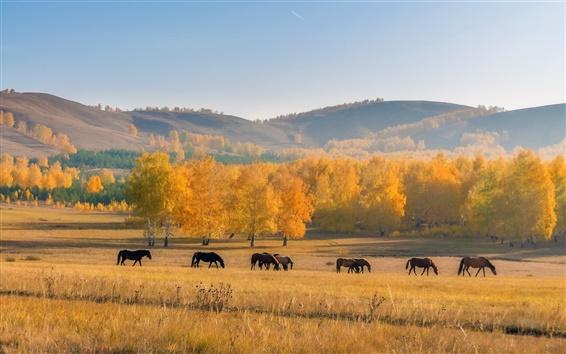 Wallpaper Autumn, horses, trees, grass, yellow, hill