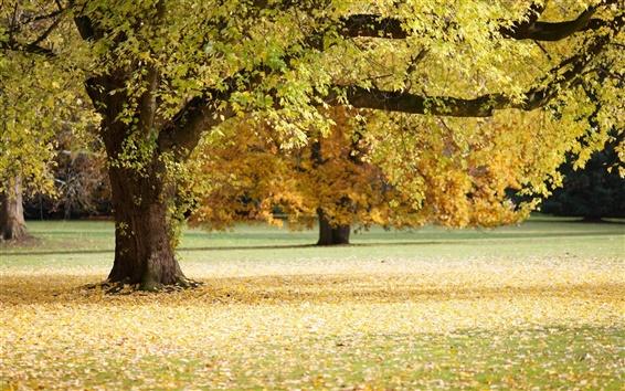 Fondos de pantalla Otoño, árbol, hojas