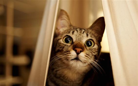 Papéis de Parede gato, espreitadelas