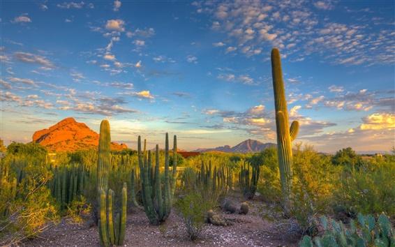 Обои Пустыня, кактус, небо, облака, закат, горы