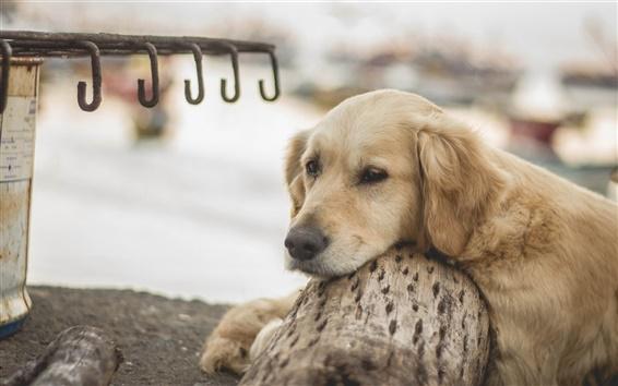 Обои Собака, отдых