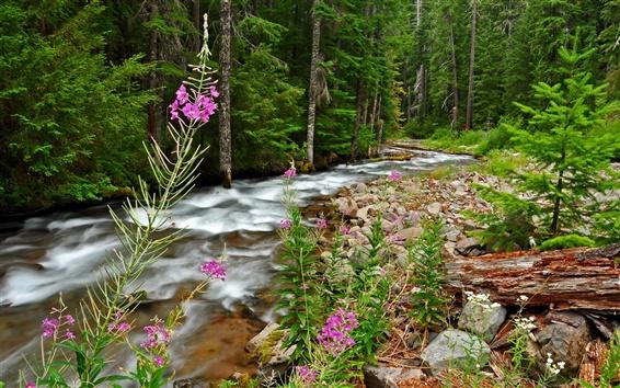 Обои Лес, деревья, камни, ручей, цветы