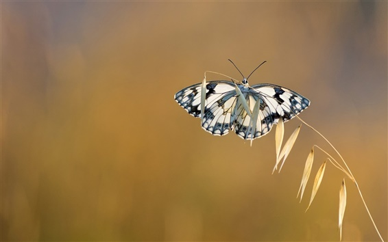 Wallpaper Grass, butterfly, bokeh