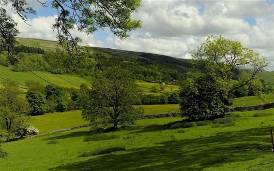 Wallpaper Kettlewell, England, pasture, trees, fields