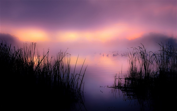 Wallpaper Lake, reeds, duck, fog, morning