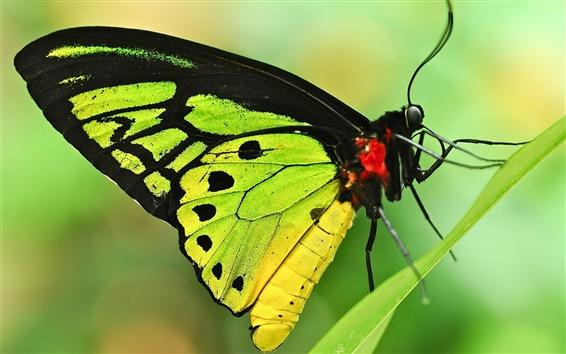 Papéis de Parede Folha, grama, borboleta