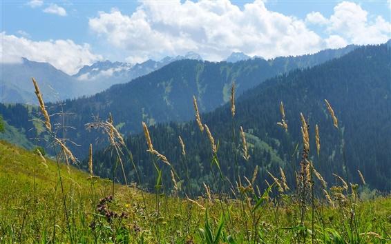 배경 화면 산, 잔디, 구름, 자연 풍경