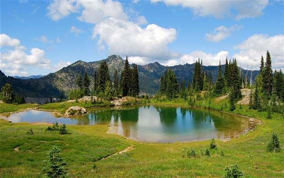 Обои Горные, озеро, трава, деревья