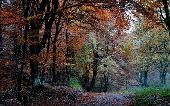 Fondos de pantalla Bosque Naturaleza, otoño, árboles, hojas, camino