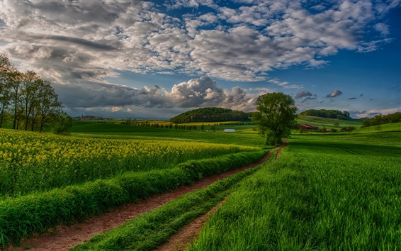 Fond d'écran Nature paysage, champs, arbres, nuages, ciel