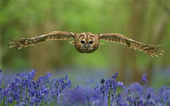 Papéis de Parede Coruja, pássaro, voo, asas, flores
