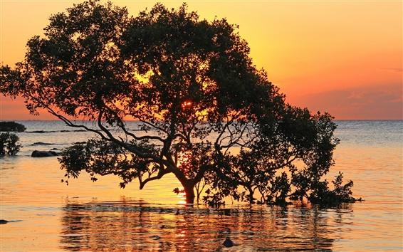 Обои Море, деревья, закат, красное небо