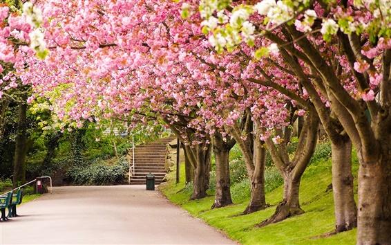 Wallpaper Sheffield, England, park, trees, cherry blossom, road, steps, spring
