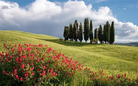 Fond d'écran D'été, arbres, champ, fleurs