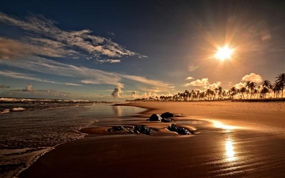 Fond d'écran Coucher de soleil, côte, plage, palmiers, Bahia, Brésil