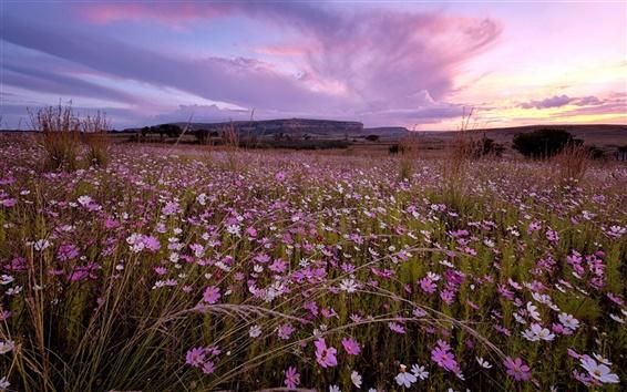 Wallpaper Sunset, wildflowers, sky, nature landscape