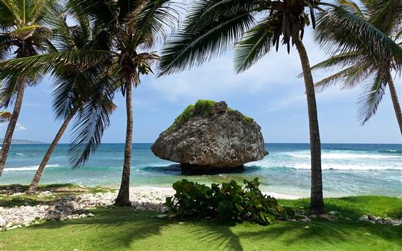 壁紙 熱帯の風景、島、海、石、ヤシの木