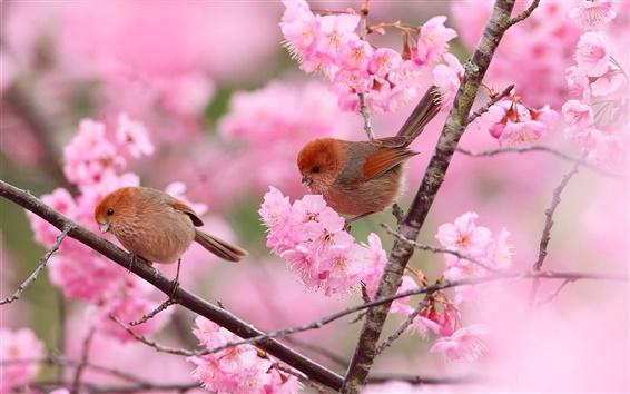 Papéis de Parede Dois pássaros, ramos, flores cor de rosa, primavera