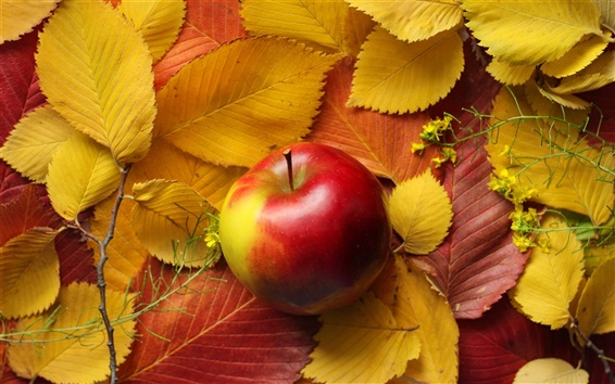 Hintergrundbilder Gelbe Blätter, rote Apfel