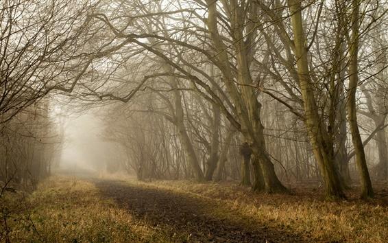 Wallpaper Autumn, trees, road, fog