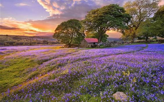Обои Синие цветы, деревья, дом, закат