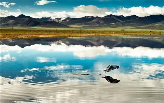 Обои Китай, Тибет, горы, облака, озеро, птицы, полет