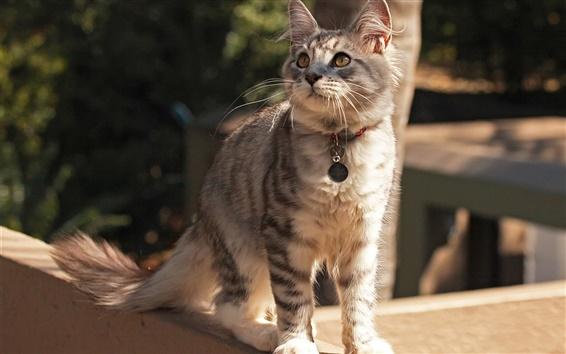 Wallpaper Cute cat, collar, street, attention