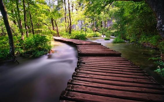 Wallpaper Forest, trees, stream, bridge