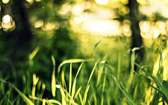 Wallpaper Grass, green, bokeh, light, macro, glare