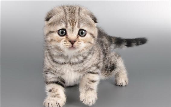 Fondos de pantalla Gato gris, gatito, cara
