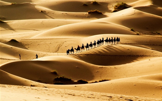 Wallpaper Hot desert, sand dunes, the caravan