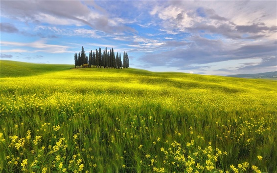 Wallpaper Italy, Tuscany, spring, fields, rapeseed flowers, sky, clouds
