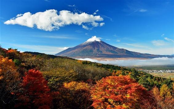 桌布 日本,富士山,天空,樹,雲,丘陵,霧