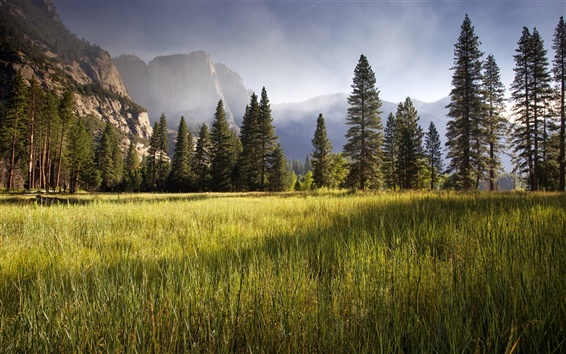 Wallpaper Meadow, Yosemite Valley, early morning, trees