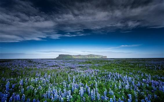 Обои Природа, поля, горы, синие цветы