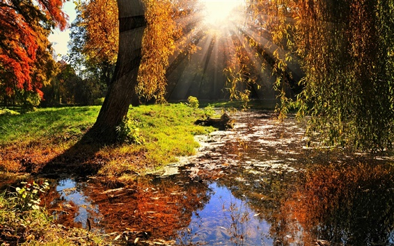 Wallpaper Nature landscape, sun rays, trees, leaves, autumn
