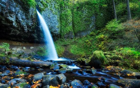 壁紙 オレゴン州、アメリカ合衆国、森、木、滝、岩