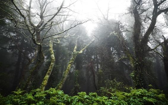 Fondos de pantalla Portugal, selva tropical, árboles, el deslumbramiento