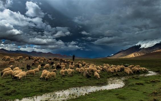 Fondos de pantalla Pradera, río, campo, ovejas