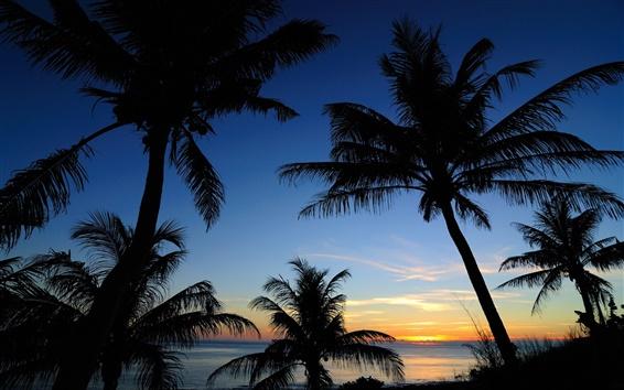 Fond d'écran Mer, ciel, nuages, des palmiers, silhouette