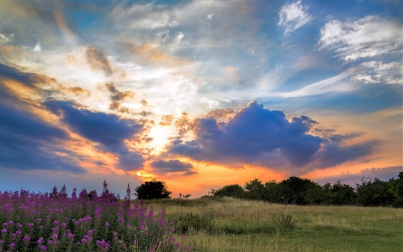 Wallpaper Sunset, grass, trees, flowers, clouds