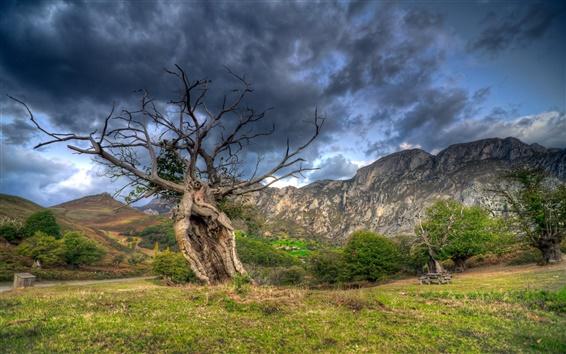 Papéis de Parede Árvores, grama, montanhas de pedra, nuvens, crepúsculo
