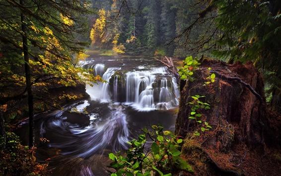 Обои США, Калифорния, Вашингтон, река Льюис, водопады, осень, лес